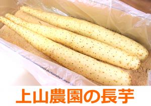 nagaimo_03